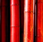 Czerwony bambus Obrazy Royalty Free