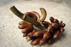 Czerwony banan obraz stock