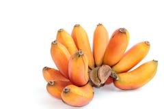 Czerwony banan, Musa bananowy Musa paradisiaca Zdjęcie Royalty Free