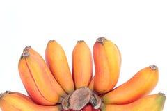 Czerwony banan, Musa bananowy Musa paradisiaca Zdjęcia Royalty Free