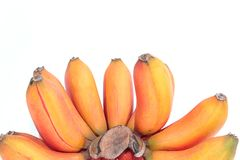 Czerwony banan, Musa bananowy Musa paradisiaca Fotografia Stock
