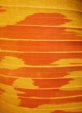 Czerwony bananowy liść zdjęcia stock