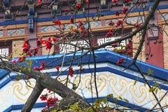 Czerwony Bawełniany kwiatu Guangzhou miasto Chiny obraz royalty free