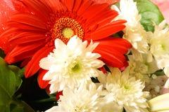 czerwony białe kwiaty Obraz Stock
