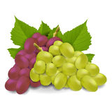 czerwony białych winogron Zdjęcia Stock