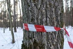 Czerwony biel zakazuje taśmy Czerwony i biały sztandar na drzewnym bagażniku zdjęcia stock