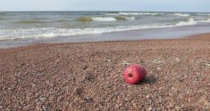 Czerwony boja na kamiennej plaży w dniu zdjęcie wideo