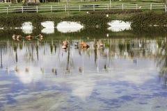 Czerwony boja rzędu unosić się i flaga odbicia w jeziorze Zdjęcia Royalty Free