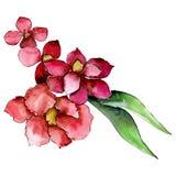 Czerwony botaniczny kwiat Odosobniony bukiet ilustracji element zielony liść tła bazy projekta ustalona akwarela royalty ilustracja