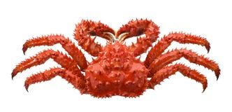 Czerwony brown królewiątko krab odizolowywający na białym tle zdjęcia stock