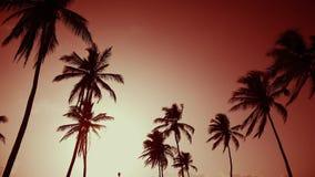 Czerwony brzasku seashore, żółty słońce i drzewka palmowego tło, zdjęcie wideo