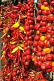 czerwony capsicum Zdjęcia Stock