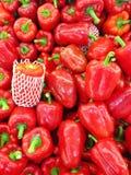 Czerwony capsicum Fotografia Royalty Free