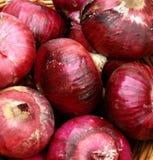 czerwony cebulę organiczne Zdjęcia Stock
