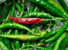 Czerwony chłód na zielonym chłodnym tle Obrazy Royalty Free