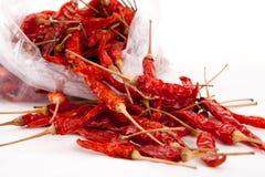 Czerwony Chili Zdjęcie Royalty Free
