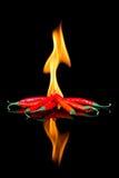 Czerwony chili na czerni powierzchni z płomieniami zdjęcia royalty free
