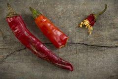 Czerwony chili pieprz Obraz Royalty Free