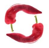 Czerwony chili pieprz Obraz Stock