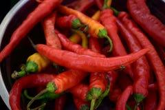 Czerwony chili pieprze Zdjęcie Stock