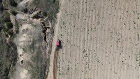 Czerwony ciągnik kultywuje ziemię w winnicy ranku na słonecznym dniu zbiory wideo