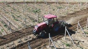 Czerwony ciągnik kultywuje ziemię w winnicy ranku na słonecznym dniu zbiory