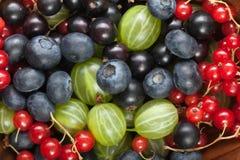 Czerwony czarnego rodzynku czarnej jagody agrest Obrazy Stock