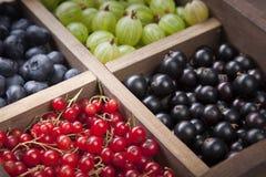 Czerwony czarnego rodzynku czarnej jagody agrest w drewnianym pudełku Obrazy Royalty Free