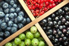 Czerwony czarnego rodzynku czarnej jagody agrest w drewnianym pudełku Fotografia Stock