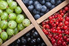 Czerwony czarnego rodzynku czarnej jagody agrest w drewnianym pudełku Zdjęcia Stock