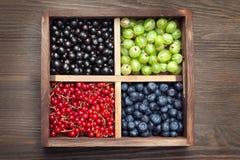 Czerwony czarnego rodzynku czarnej jagody agrest w drewnianym pudełku na starym Obraz Royalty Free
