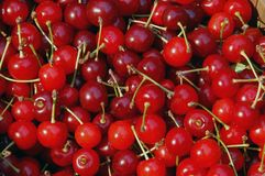 czerwony czereśni Obraz Stock