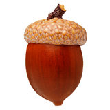 Czerwony dębowy acorn Zdjęcie Royalty Free