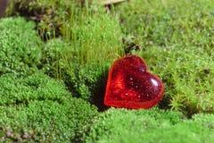 Czerwony dekoracyjny szklany serce kłama na zielonym mech Fotografia Royalty Free