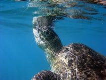 czerwony denny żółw Zdjęcia Royalty Free