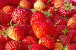 Czerwony dojrzały truskawkowy zbliżenie Obraz Stock