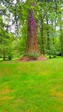 czerwony drzewo Zdjęcia Royalty Free