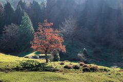 Czerwony drzewo w Urkiola Naturalnym parku, Baskijski kraj fotografia stock