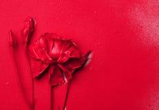 Czerwony eustoma kwiat na czerwonym papierowym tle z kroplami farba fotografia royalty free