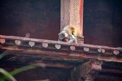Czerwony fort lokalizujący w Agra, India Fotografia Royalty Free