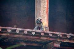 Czerwony fort lokalizujący w Agra, India Zdjęcia Stock