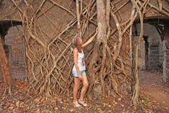 Czerwony fort w India, Goa Korzenie i bagażniki starzy drzewa chwytali t obrazy royalty free