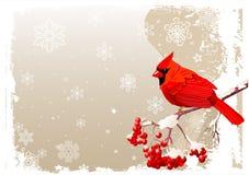 Czerwony Główny ptasi tło Obrazy Royalty Free