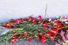 Czerwony go?dzik kwitnie przy pomnik?w spada? ?o?nierzami w drugiej wojnie ?wiatowej zdjęcia royalty free