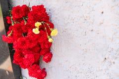 Czerwony go?dzik kwitnie przy pomnik?w spada? ?o?nierzami w drugiej wojnie ?wiatowej zdjęcie stock