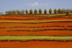 czerwony gruntów Fotografia Royalty Free