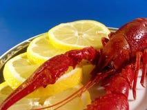czerwony homar Fotografia Stock