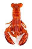 Czerwony homar Obrazy Stock