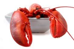 czerwony homar tło odizolowane white Zdjęcia Royalty Free