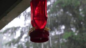 Czerwony hummingbird dozownik out w deszczu zbiory wideo